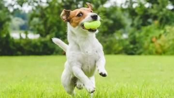 Brown Spots Dog Waste Cleanup Kansas City Independence Blue Springs