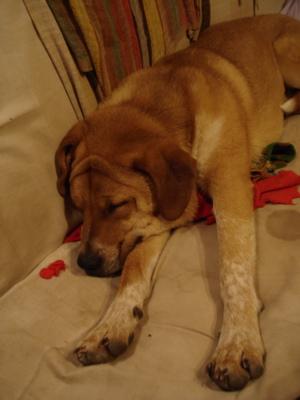 sleepy-dog.jpg