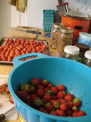 berriesfreezing1