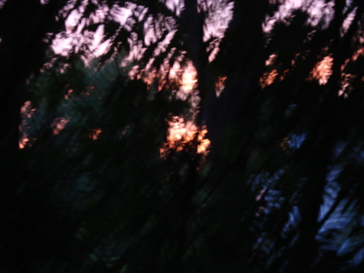 sunset2041