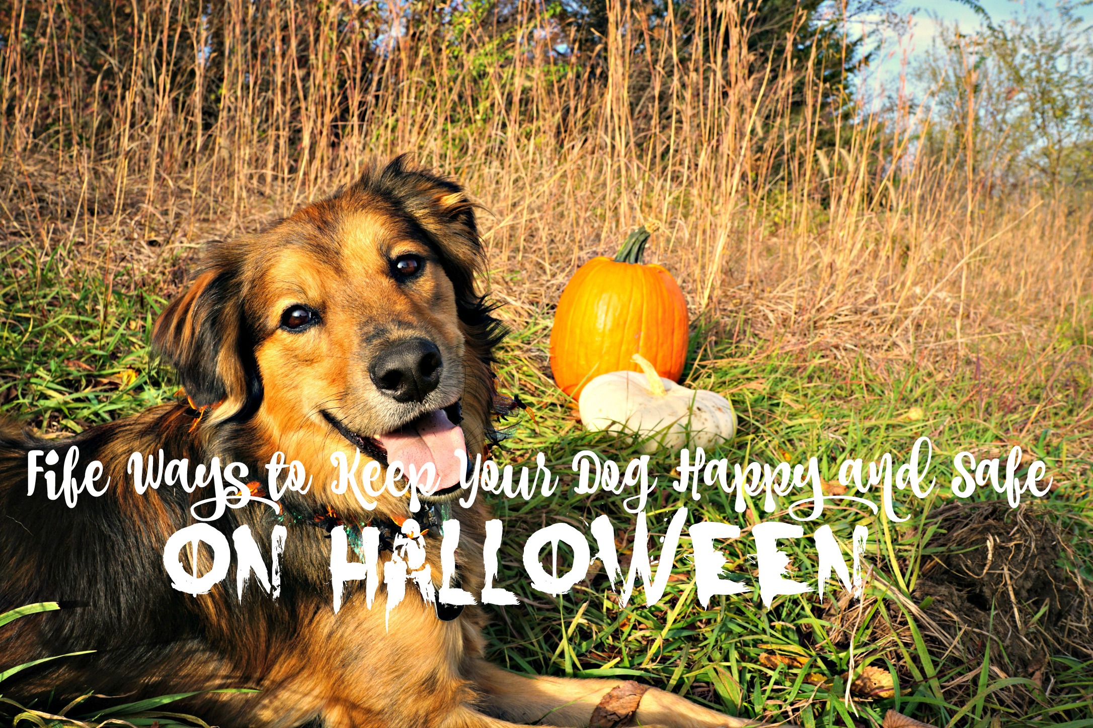 Tricks for Treats: 5 Ways to Make Sure Halloween is Fun and Safe for your Dogs