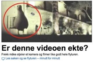 NRK Seagull GoPro crop