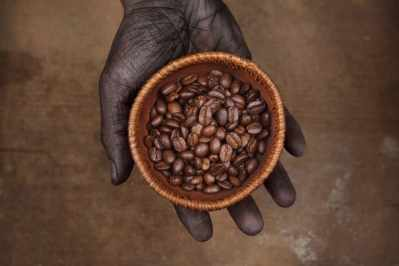 grains_de_cafe_specialite_bourbon_pointu_laurina_arabica