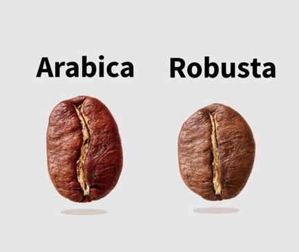 giống arabica vs robusta