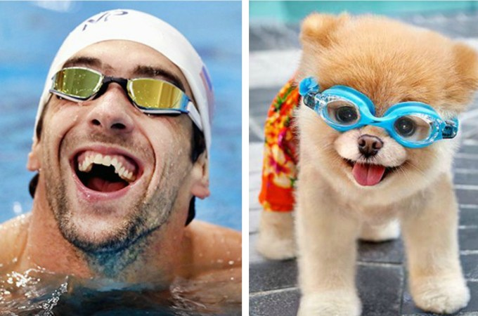8 Famous Dogs That Look Like Celebrities