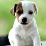 New Puppy Guide – Surviving The First 24 Hours