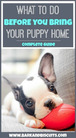 What To Do Before You Bring Your Puppy Home