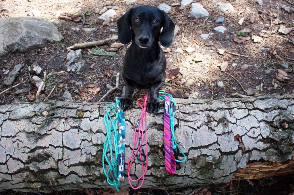 dachshund hiking