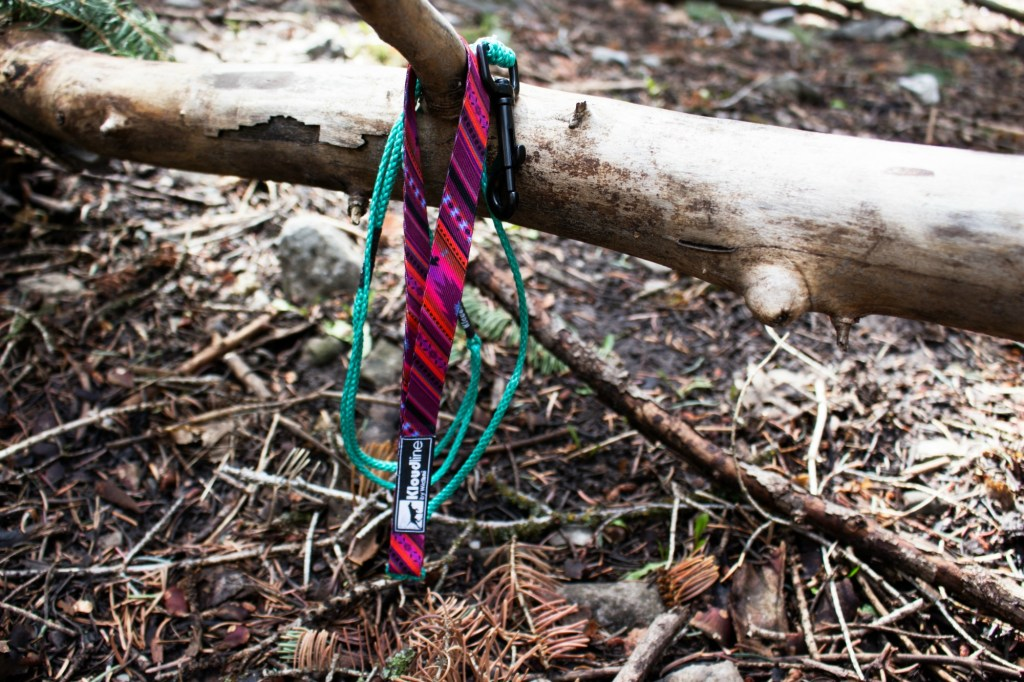 colorful, lightweight dog leash