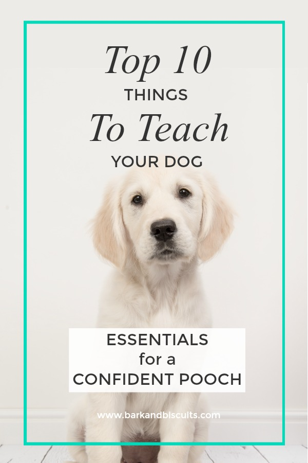 Top 10 Things to Teach Your Dog.