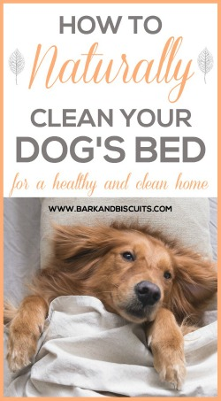 How To Naturally Clean Your Dog's Bed. Easy, effective and all-natural!