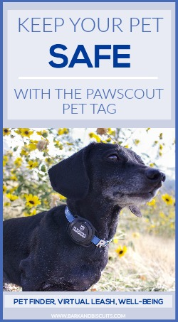 Keep your pet safe with the Pawscout Pet Tag