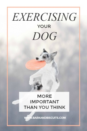 The Importance Of Exercising Your Dog