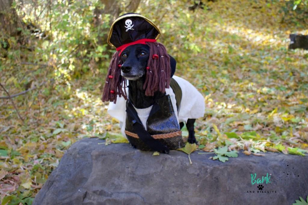 Handmade Pirate Costume for Dog