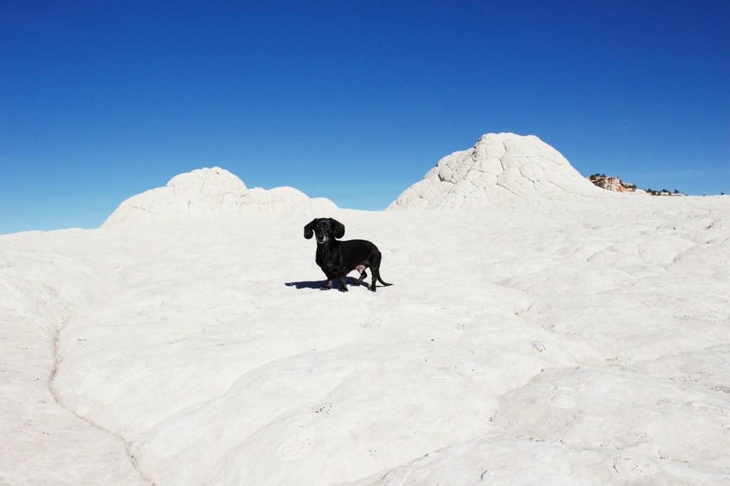 Dog-Friendly Southern Utah-Scenic Adventure