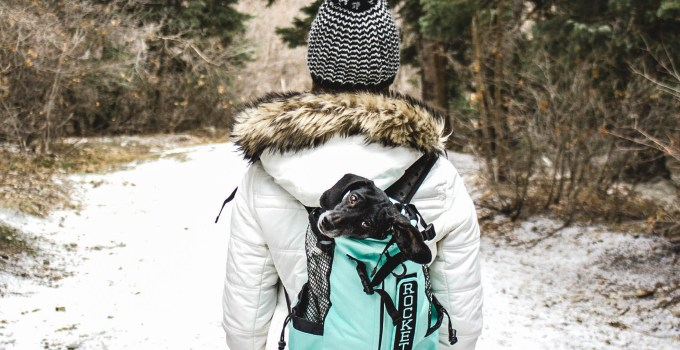 Dog Backpack – Travel Everywhere With Your Dog In The K9 Sport Sack