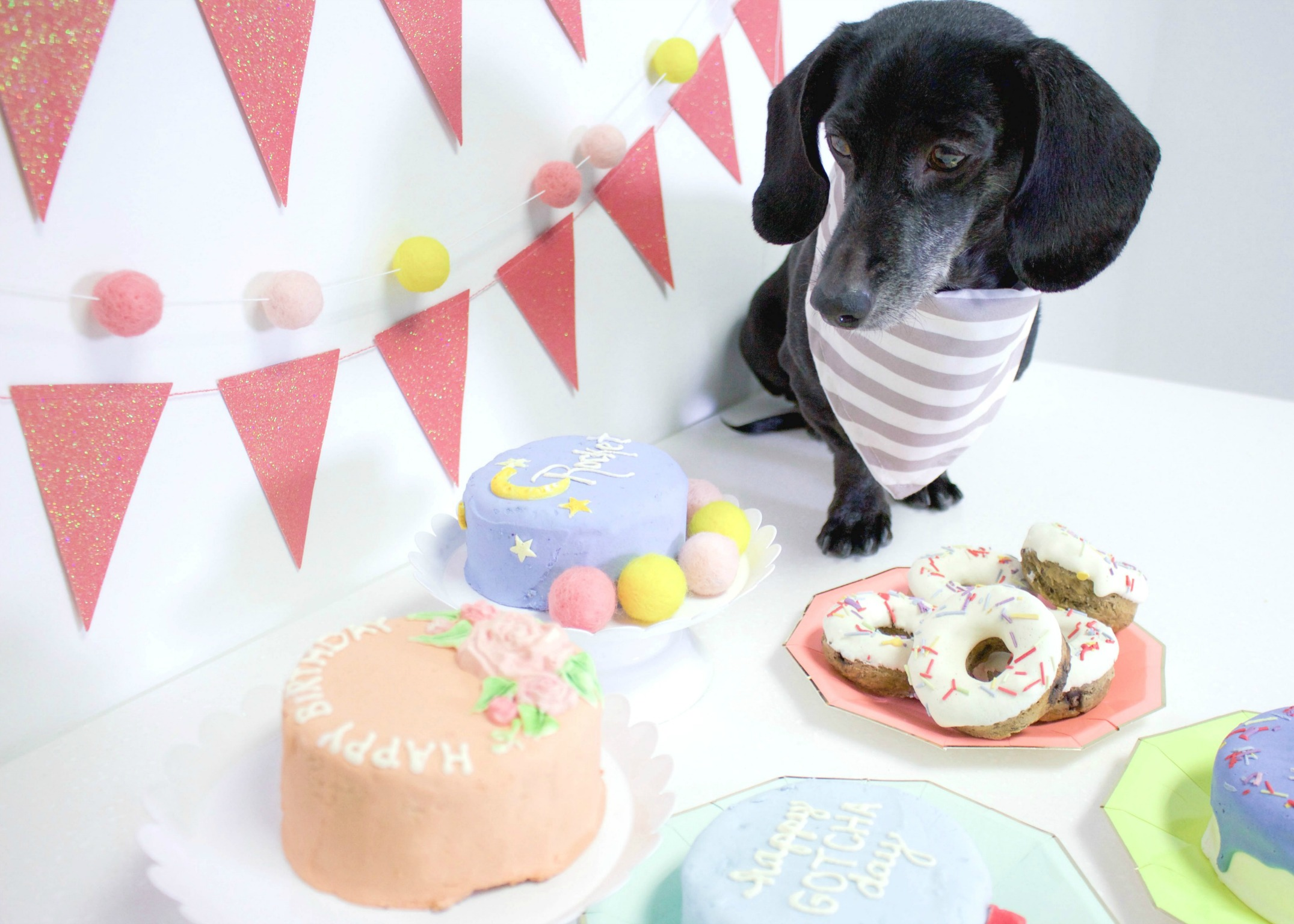 Here Is The Best Way To Celebrate Your Dogs Birthday