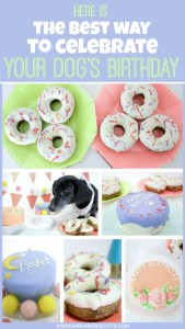 Here is the best way to celebrate your dog's Birthday! Amazing cakes and treats to spoil your pup!