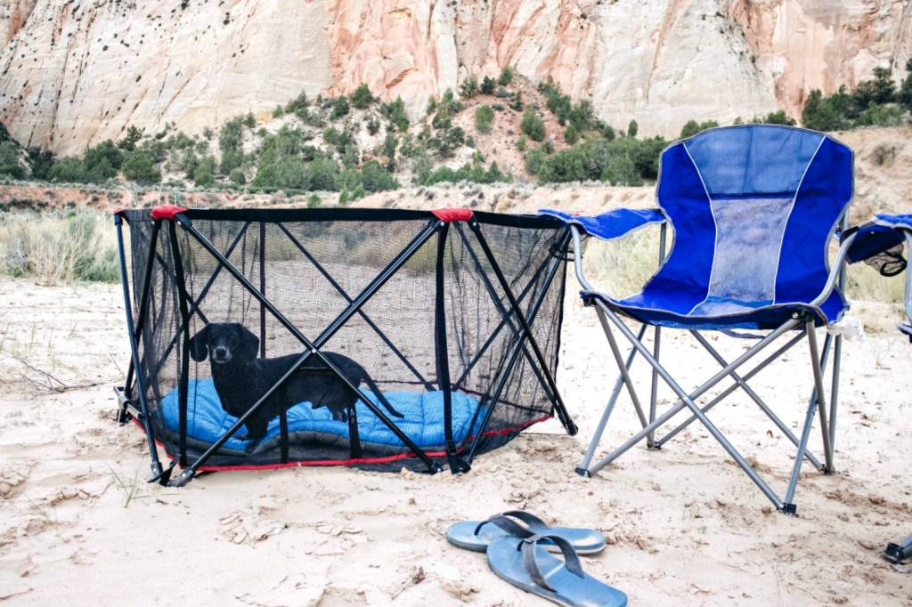 Camping With Dogs - Top 10 Must Have Gear