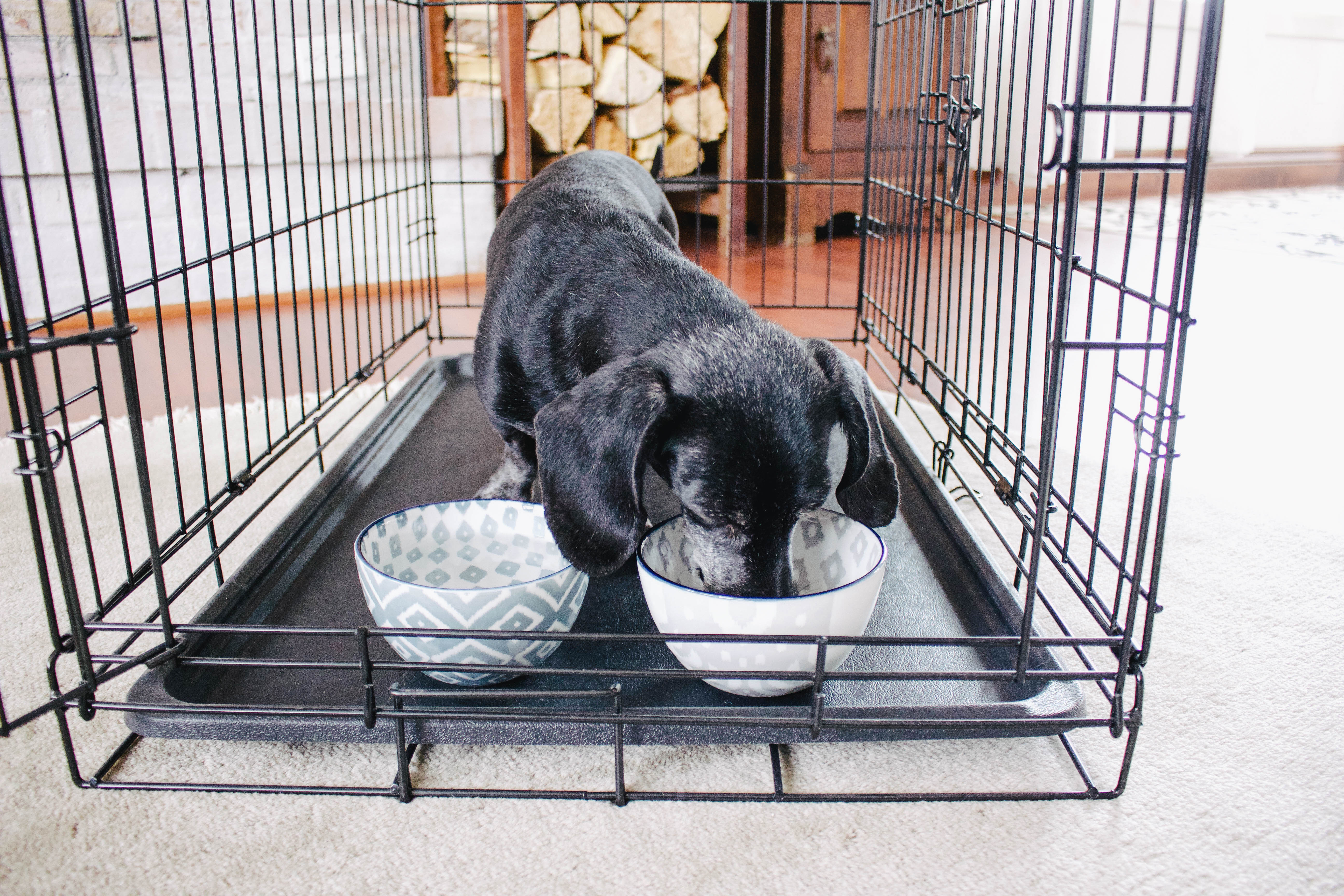 How To Crate Train Your Dog