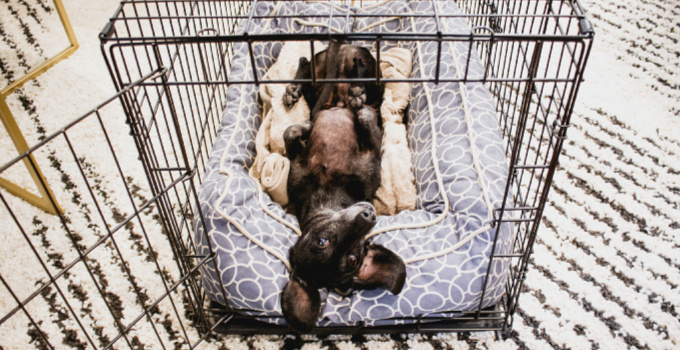 Crate Training Your Dog - The Essentials