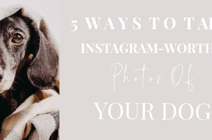 5 Ways To Take Instagram-Worthy Photos Of Your Dog