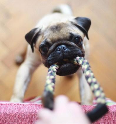 Vet Recommended Dog Dental Chews