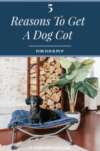 dog cot