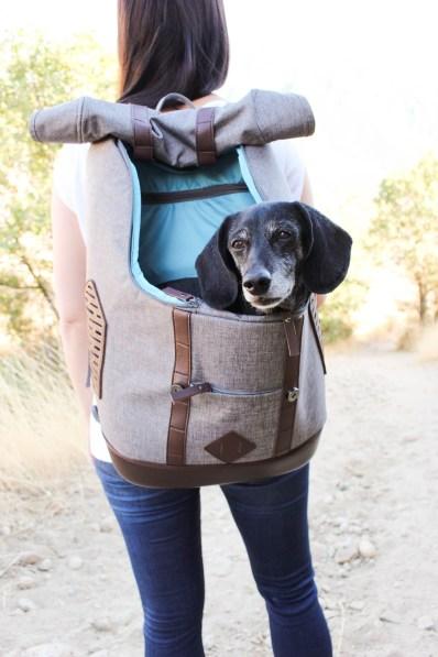 Dachshund in Rucksack Dog Carrier