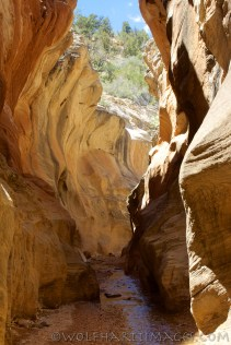 Willis creek slot