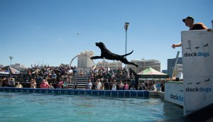 Dog dock diving in front of a crowd