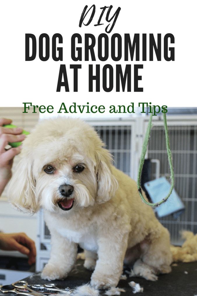 diydoggrooming