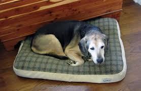 arthriticdog