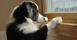 indoor dog