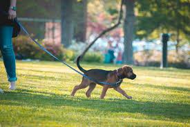 dog walking games