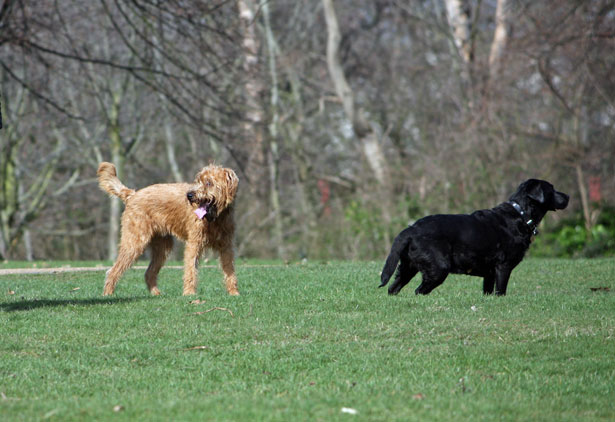 dog exercise games