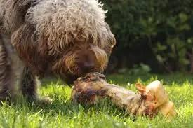 Can dogs eat Pork - Bark How