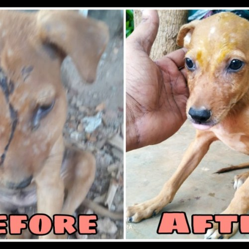 Wounded puppy transformation- Street dog rescue and treatment