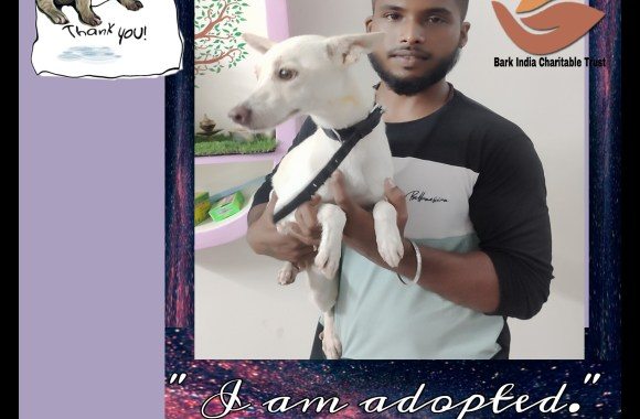 Abandoned Puppy got adopted to new happy home- Adopt , Don't buy.