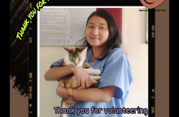 Volunteer Veterinarian – Veterinarians are welcome