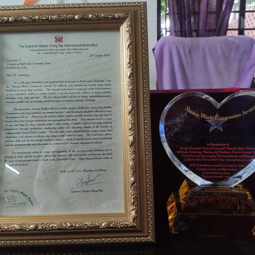 Shining World Compassion Award – An Accolade to Charity for stray animals