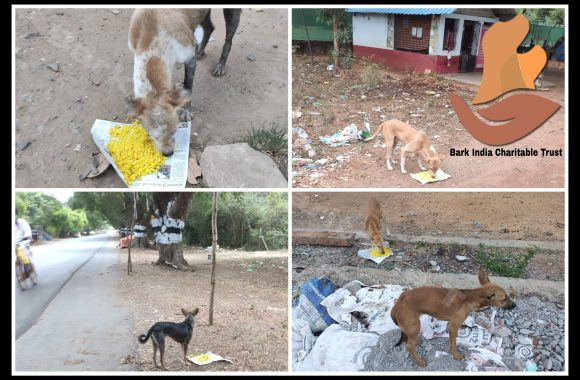 Feed Starving Strays! Donate Today