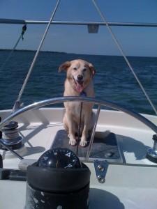 Captain Cody