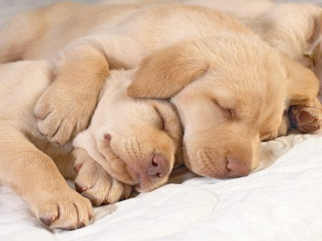 Only the Cutest Sleeping Puppy Photos on the Whole Internet | BarkPost