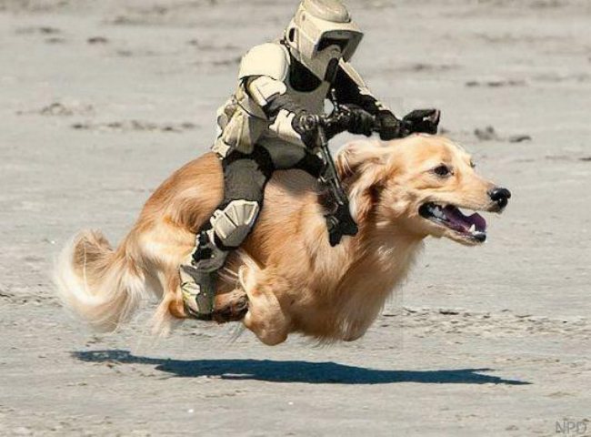 Dogs Celebrate Star Wars Day... the Results Are Hilarious