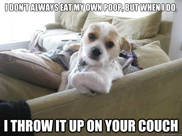 The 9 Dog Memes Every Respectable Dog Person Should Know Barkpost