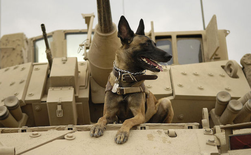 Care Package for Soldier Dogs from BarkPost [Weekly Round-Up at High-Heeled Love]