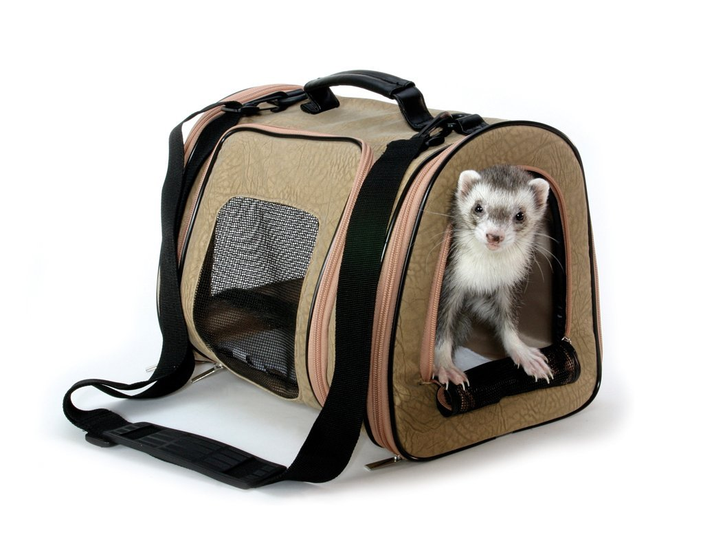 Flying With Cats Air Travel Tips