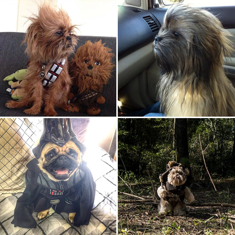 star-wars-dogs-feature-gallery