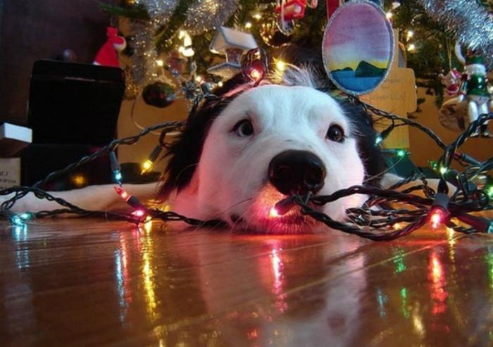 5 Smart Ways To Dog Proof Your Christmas Tree BarkPost